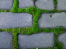 Mossagräsplan ackumulerar runt om de gråa tegelstenarna arkivfoton