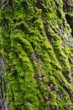 Mossan på trädskället Arkivfoton