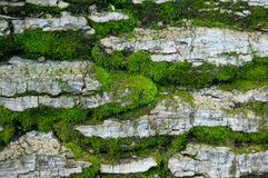 Mossbakgrund Arkivfoton