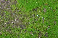Mossbakgrund Fotografering för Bildbyråer