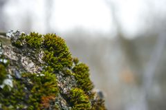 Mossbark στοκ φωτογραφία με δικαίωμα ελεύθερης χρήσης