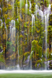 Mossbrae Falls, Dunsmuir, Ca. Mosbrae Falls just outside of Dunsmuir, California is gargantuine in scale, but even the smallest parts of the falls are beautiful Royalty Free Stock Images