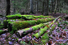 Mossed covered logs Royalty Free Stock Photo