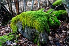 Mossed täckte stenen Arkivfoto
