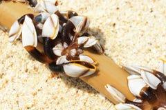 Mossel die op het strand wordt verloren Royalty-vrije Stock Foto