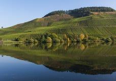 Mossele med vingårdar Arkivfoton
