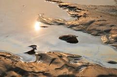 Mosselen in een vuile rivier Stock Fotografie