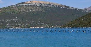 Mosselenlandbouwbedrijf in Kroatië, heuvels in backround Stock Fotografie