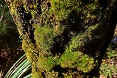 Mossen en flora in natuurlijk bos royalty-vrije stock foto