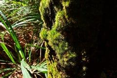 Mossen en flora in natuurlijk bos stock fotografie