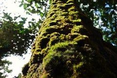 Mossen en flora in natuurlijk bos stock afbeeldingen
