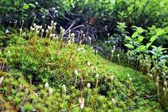 Mossen en moszaden Stock Afbeelding