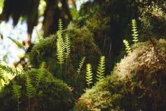 Mossen en Varens stock afbeelding
