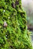 Mossen, korstmossen en paddestoelen Stock Foto