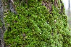 Mossen, korstmossen en paddestoelen 2 Stock Foto