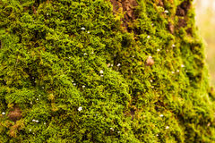 Mossen, korstmossen en paddestoelen 3 Royalty-vrije Stock Afbeeldingen