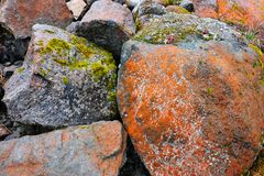 Mossen op stenen Stock Afbeelding