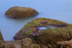 Mosses and algae on rocks at sea Stock Photography