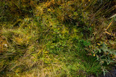 Mosses Royalty Free Stock Image