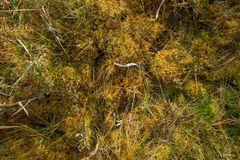 Mosses Royalty Free Stock Photos