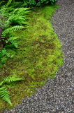 Mosses, ferns and fine stones Stock Photos