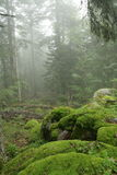Mosses in forest Stock Images
