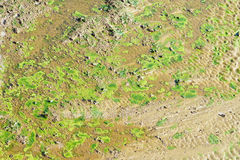 Mosses. The green mosses in river course Stock Images