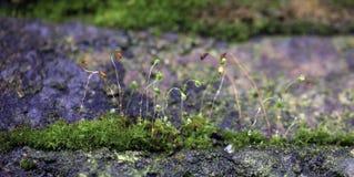 Mosses Stock Photo