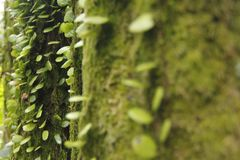 Mosses and Lichen Royalty Free Stock Image