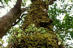 Mosses and lichens, sub alpine forest. Northern Thailand stock photo