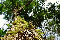 Mosses and lichens, sub alpine forest. Northern Thailand royalty free stock photography