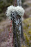 Mosses and lichens Stock Photography
