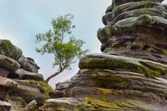 Mosses and lone tree at Brimham Rocks. Lone tree between rock formations at Brimham Rocks, Yorkshire Dales, England Stock Photography