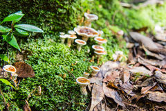 Mosses and mushrooms in nature Stock Photo