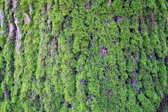 Mosses Royalty Free Stock Photography