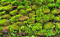 Mosses on the rocks. Green mosses grow on long time wet rocks and stones Stock Photo