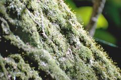 Mosses Stock Images