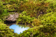Mosses and a small puddle of water reflecting the sky Royalty Free Stock Image