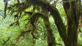 Mosses Stock Image