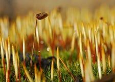 mossfjäder Fotografering för Bildbyråer