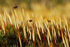 mossfjäder Arkivfoto