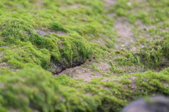 Mossification. Moss captured at the beach, very green and very beautiful,shiny too Stock Images