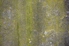 Mossig betongväggbakgrundstextur Royaltyfri Fotografi