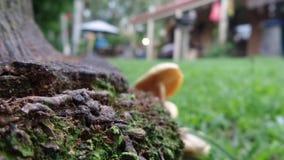 Mossig fokuschampinjon i avståndsträdgård Royaltyfri Foto