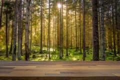 Mossig grön skog med det varma panelljuset som göras suddig i bakgrunden arkivfoto