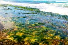Mossig shoreline Arkivbilder