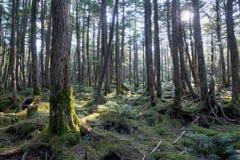 Mossig skog Royaltyfria Bilder