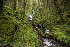 Mossig skog för ström im i Skottland Royaltyfria Bilder