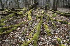 Mossig skyddande skog Arkivfoto