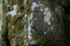 Mossig sten för närbild Arkivbild